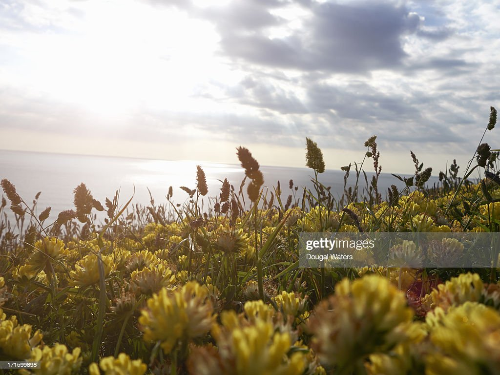 View of summer flowers close up with sunburst : Stock Photo