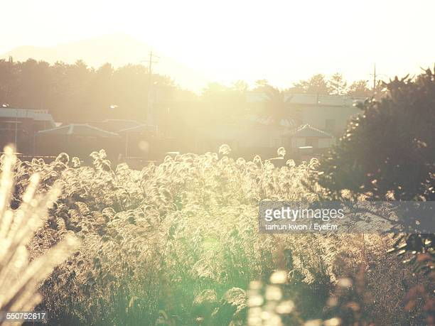 View Of Sunlight On Plants