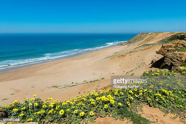 View of the Atlantic Ocean from a cliff near the small town of Asilah near Tangier Morocco with wildflowers in foreground