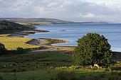 Claonaig, Mull of Kintyre, Scotland