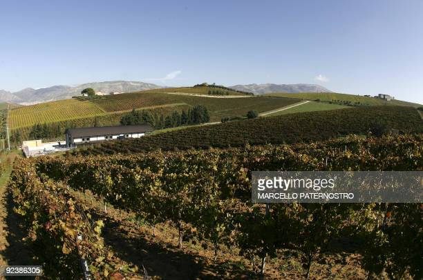 View of the ' Centopassi ' factory in the middle of confiscated vineyards in San Cipirello on October 27 2009 during the official opening ceremony...