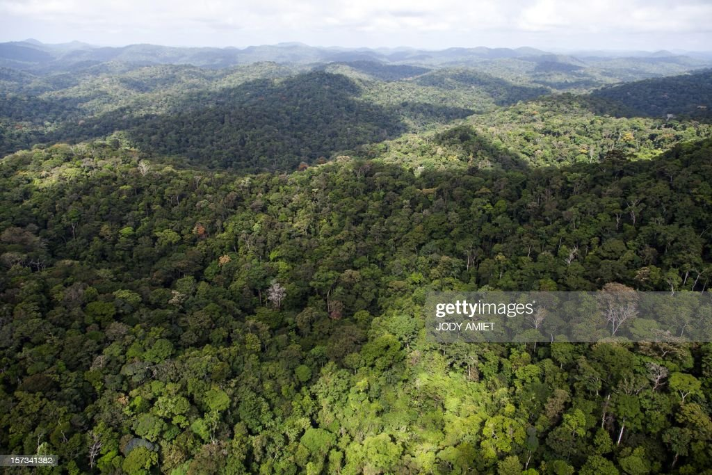 A view of the forest in French Guyana near Dorlin, on December 1, 2012. AFP PHOTO / JODY AMIET