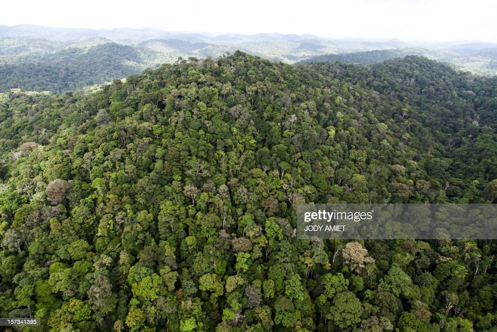 A view of the forest in French Guyana near Dorlin, on December 1, 2012.