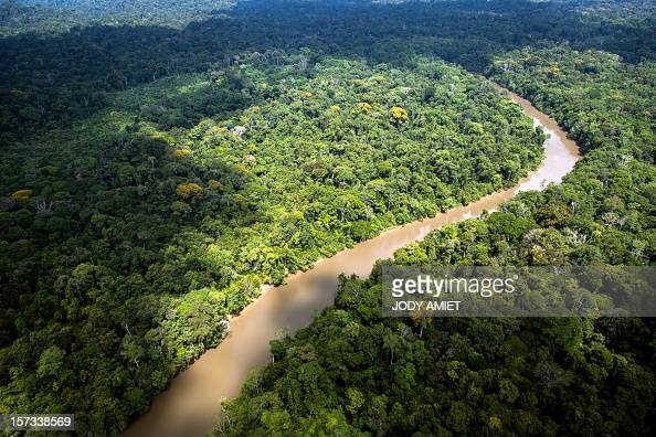 A view of the forest in French Guyana near Dorlin on December 1 2012 AFP PHOTO / JODY AMIET