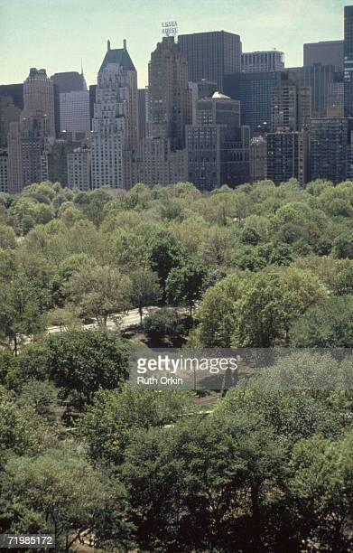 View of the green trees of Central Park seen against a portion of the Manhattan skyline New York New York 1981 The photograph entitled 'Summer Green'...