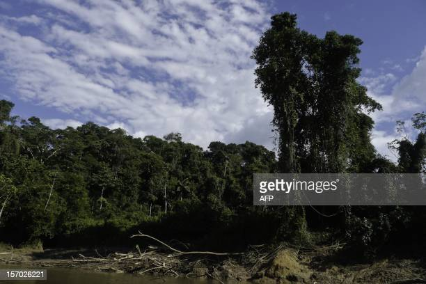 View of the jungle from the Tiputini River in the Ecuadorean Yasuni National Park Orellana province Ecuador on November 9 2012 The Yasuni National...
