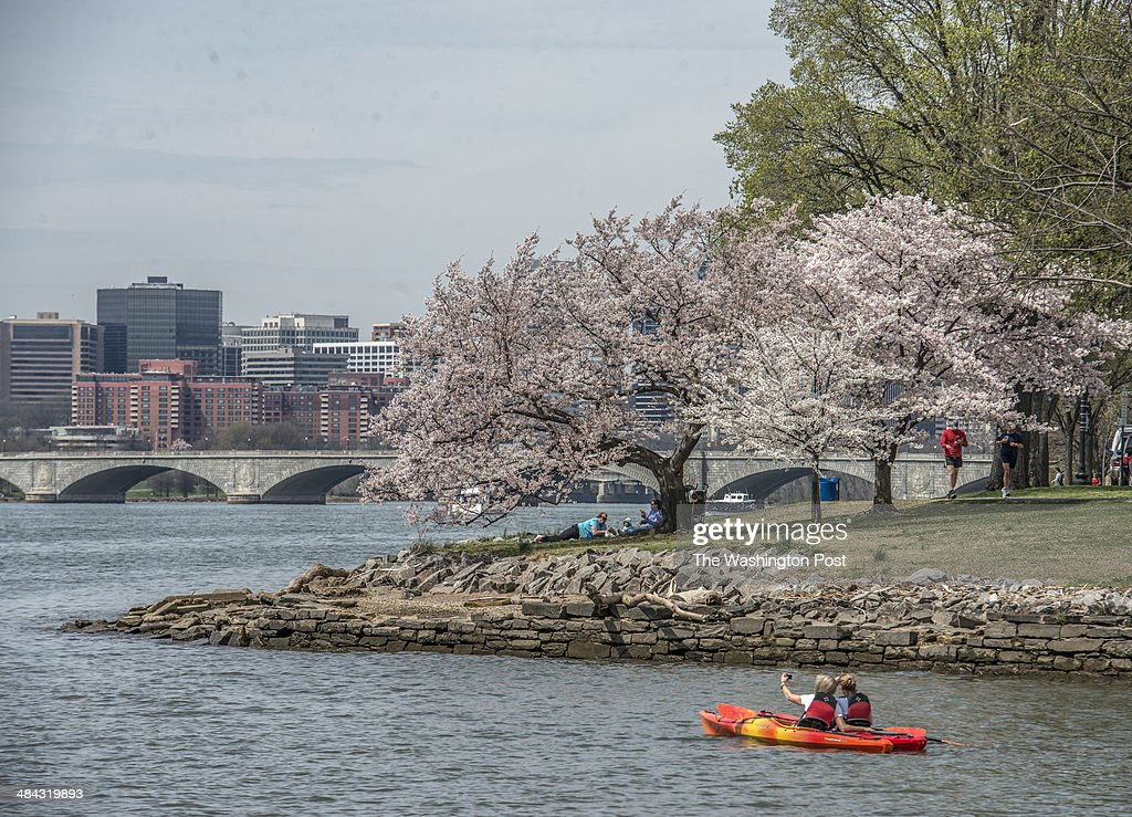 A view of the Potomac river and Memorial bridge as cherry blossoms peak bloom around the Tidal Basin This matches up with an earlier snowy version