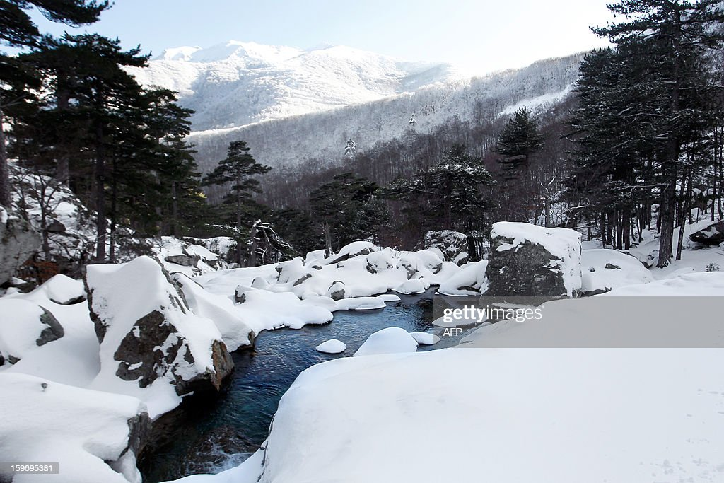 A view of the snow-covered forest near the Vizzavona mountain pass, close to Bocognano in the French Mediteranean Island of Corsica. AFP PHOTO / PASCAL POCHARD-CASABIANCA