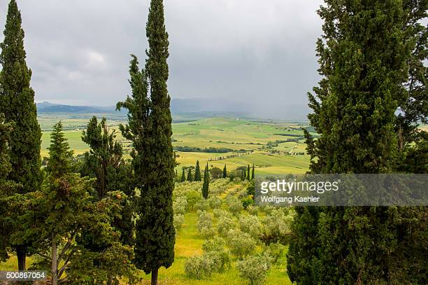 View of the Val d'Orcia near Pienza with Italian cypress trees and olive trees Tuscany Italy