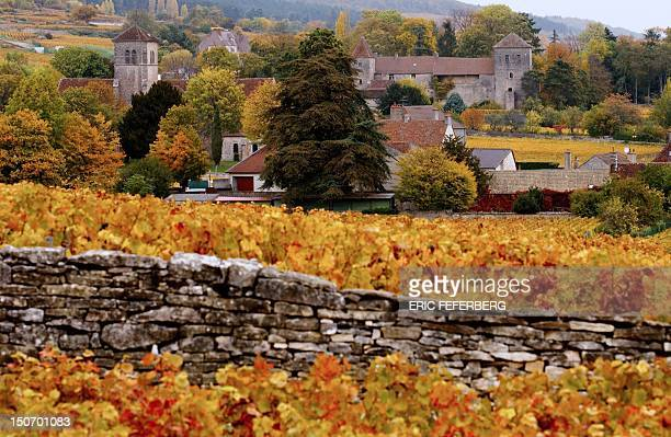 View of the vineyard around the GevreyChambertin castle on October 12 in Gevrey Chambertin Burgundy eastern France The 12thcentury chateau was sold...