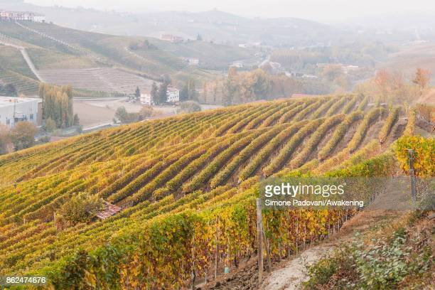 A view of the vineyards of Barolo is seen on October 17 2017 in the Barolo region Italy Because of the high summer temperatures Barolo's harvest has...