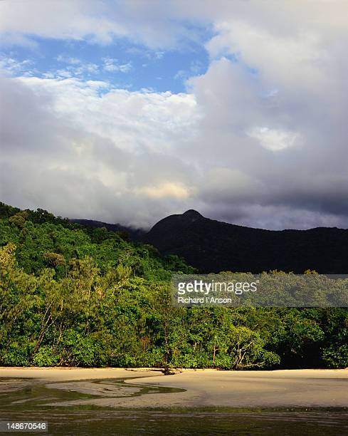 View of the virgin beach, rainforest and mountain at Cape Tribulation.