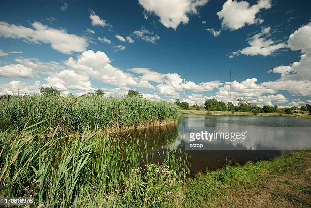 View of the Wetlands with reeds under a blue sky