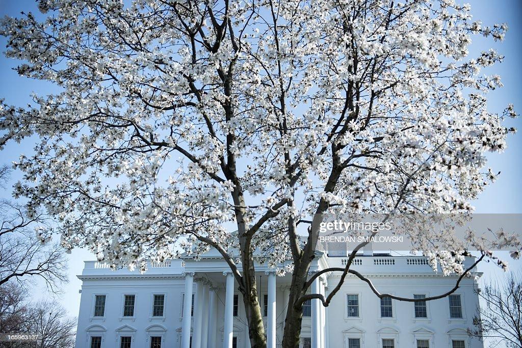 A view of the White House as spring approaches ON April 5, 2013 in Washington. AFP PHOTO/Brendan SMIALOWSKI