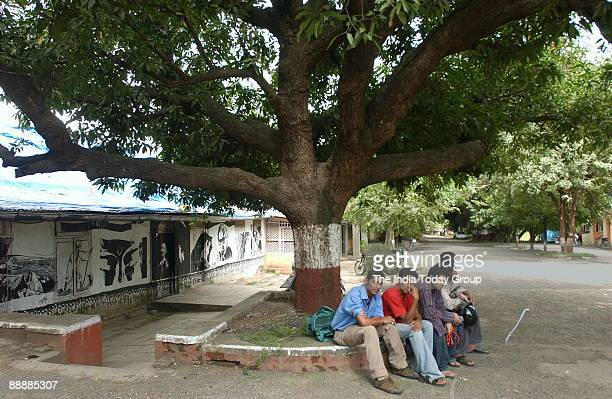 View of the Wisdom Tree at Film and Television Institute of India in Pune Mahararashtra India