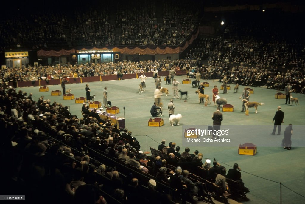A view of the Working Dog Group during the Westminster Kennel Club Dog Show at Madison Square Garden in New York New York