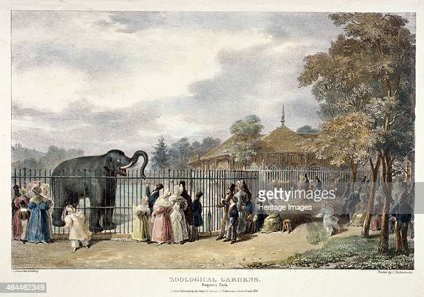 View of the Zoological Gardens in Regent's Park London 1835 showing figures feeding an elephant