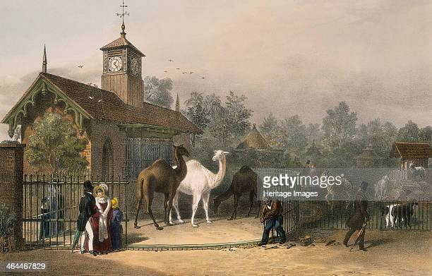 View of the Zoological Gardens in Regent's Park London 1835 showing figures by the camel house to the left and to the right a pen filled with sheep...