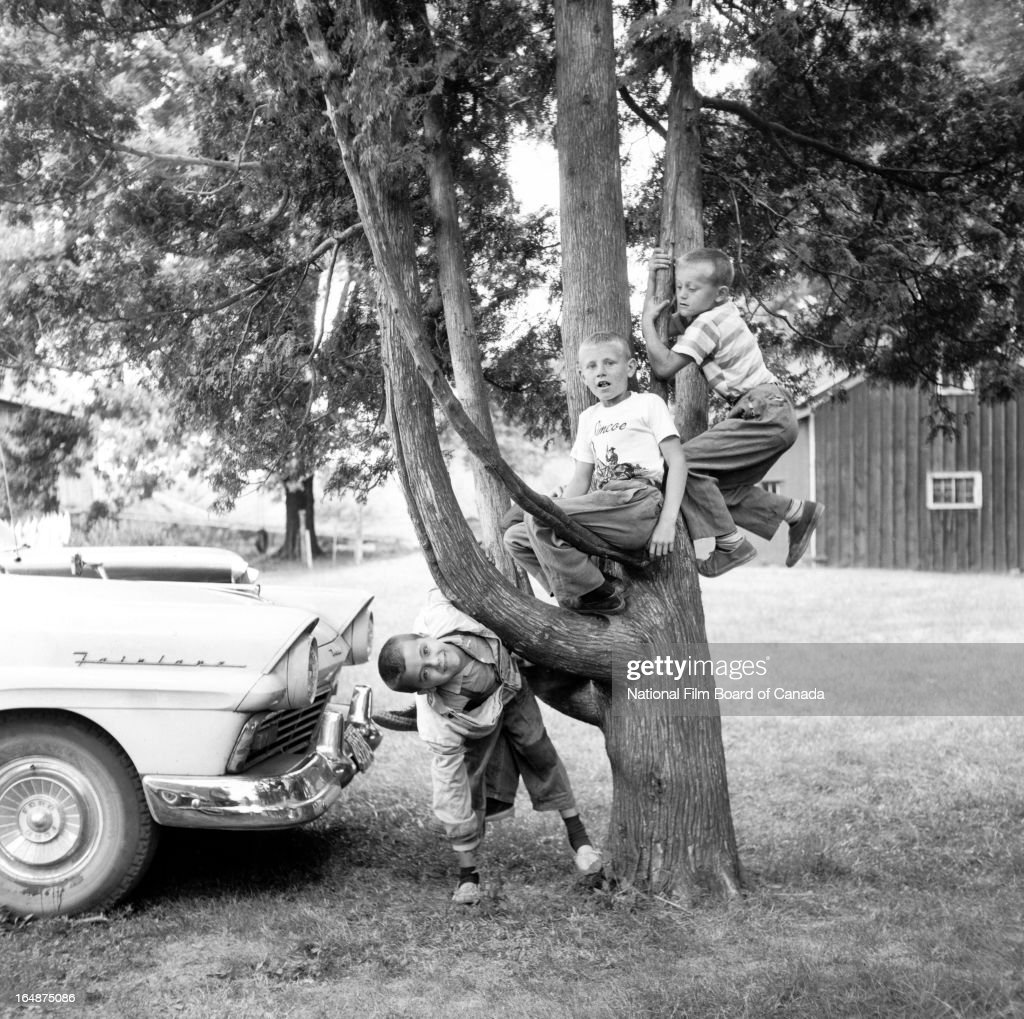 View of three boys playing in a cedar tree on a tobacco farm Delhi Ontario Canada August 1959 Photo taken during the National Film Board of Canada's...