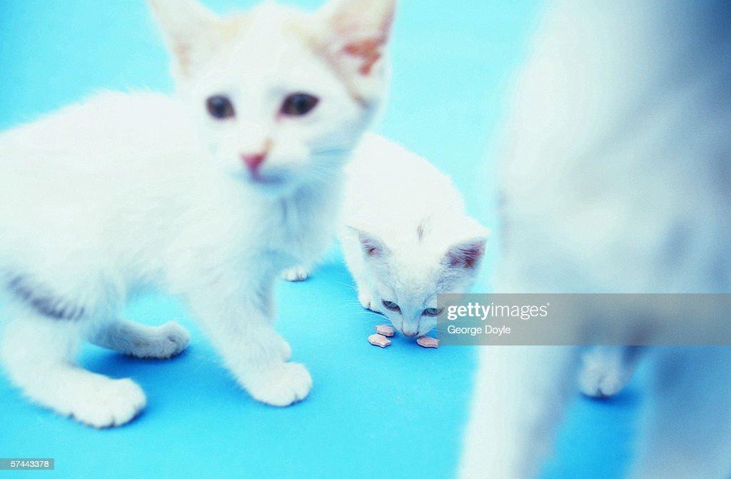 view of three kittens : Stock Photo