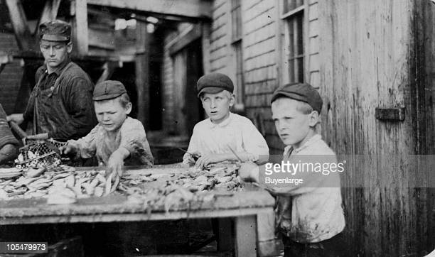 View of three young cutters who work in the Seacoast Canning Company of Eastport ME 1911 From factory number 4 the boys range in age from ten to...
