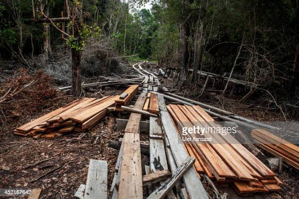 A view of timbers and logging railroad is used for transport logs from tropical rainforest made by illegal loggers at Kerumutan protected tropical...