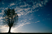 View of tree in field at dusk