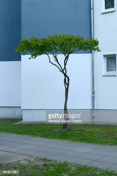 View Of Tree In Front Of Building