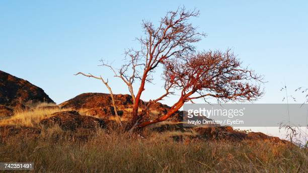 View Of Tree On Landscape Against Clear Sky
