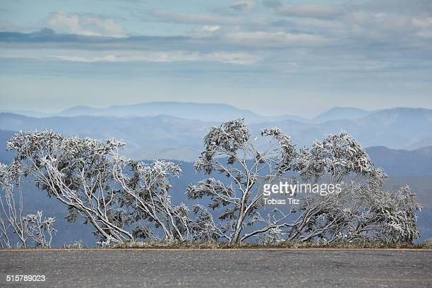 View of trees covered with snow, mountains in background, Mt Hotham, Victoria, Australia