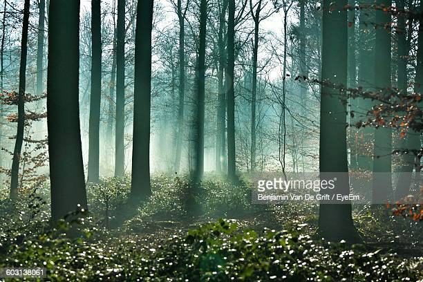 View Of Trees In The Forest
