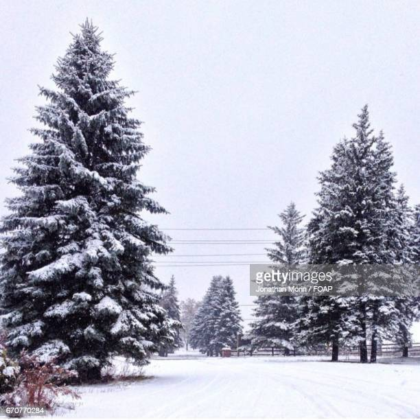 View of trees in winter