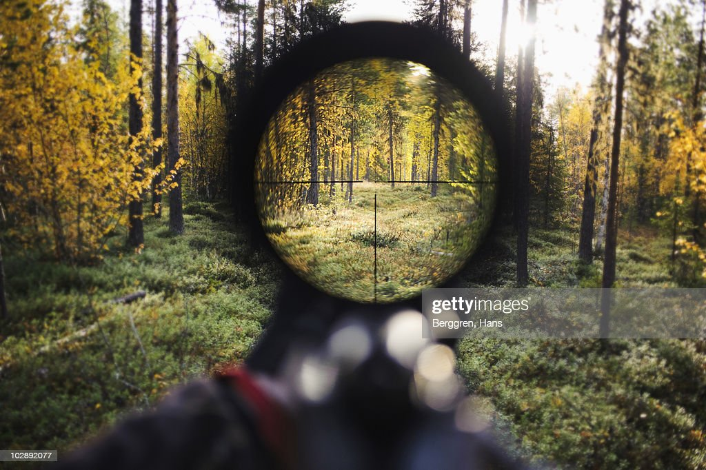 View of trees through rifle sight