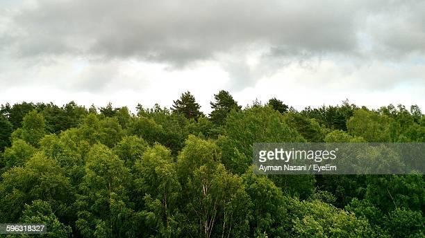 View Of Treetops In Forest