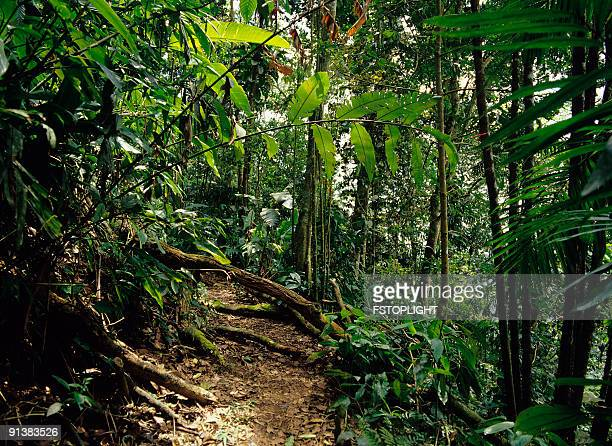 View of tropical rain forest