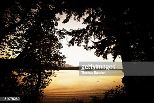 View of water through trees at sunset : Stock Photo
