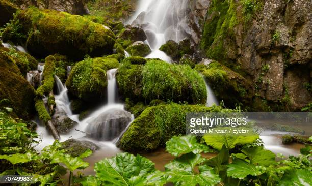 View Of Waterfall Along Plants