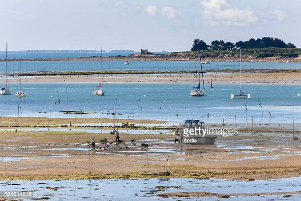 View on the ocean from the coastline in La Trinite sur Mer oyster boats and oyster farmers at work with sailing yachts anchoring at low tide