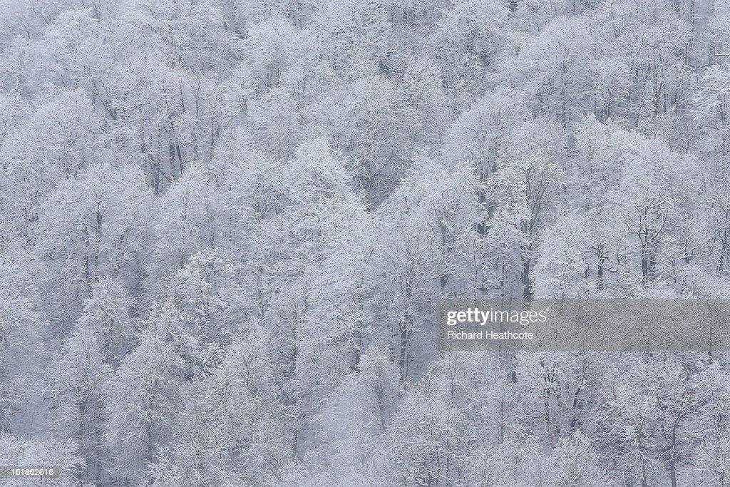 A view over snow covered trees in the Krasnaya Polyana mountain range at the Rosa Khutor Alpine Ski Resort in Krasnaya Polyana on February 14, 2013 in Sochi, Russia. Sochi is preparing for the 2014 Winter Olympics with test events across the venues.