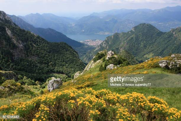 View over the wild Val d'Era and the Como Lake, with broom flowers