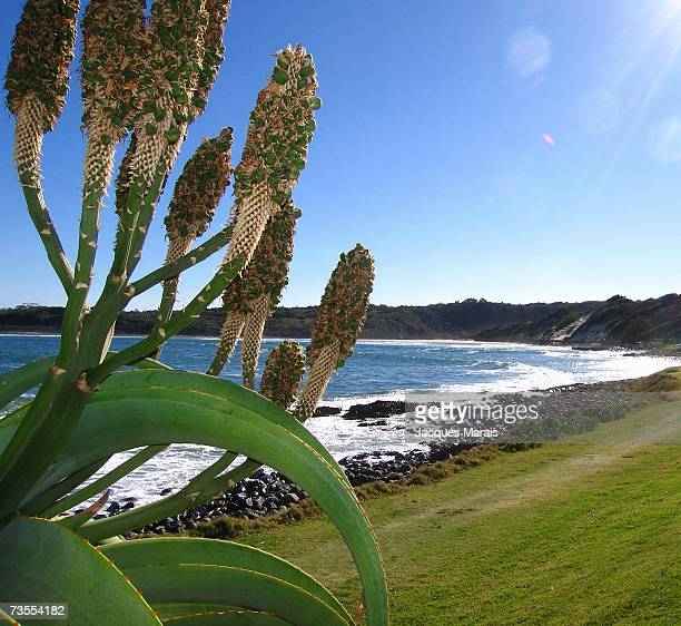 View Past an Aloe on Gonubie Beachfront