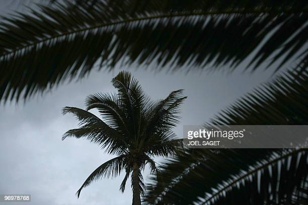 View taken on October 16 2009 in SaintDenisdelaReunion of coconuts palms Coconuts palms frequently grow 20 to 25 metres high and are among the oldest...