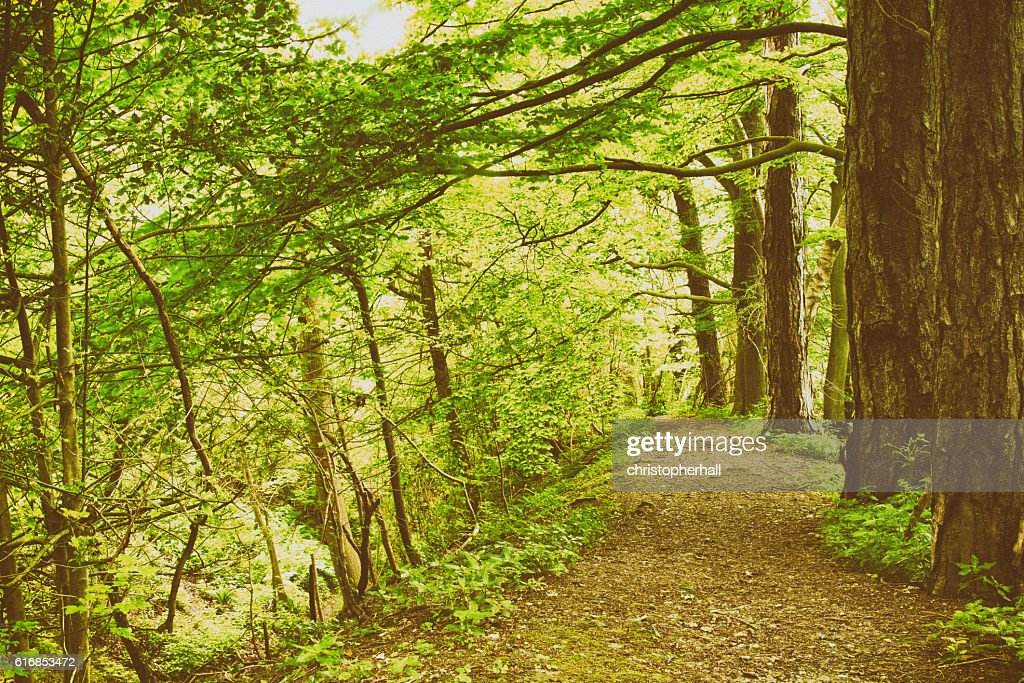 View through English woodland in the summer : Stock Photo