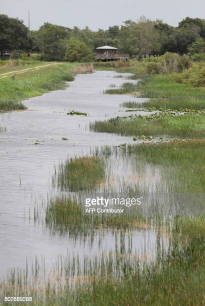 A view through the Everglades at the Arthur R Marshall Loxahatchee National Wildlife Refugee in Boynton Beach Florida on Monday June 19 2017 Founded...