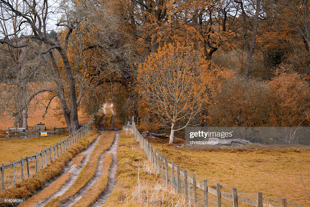 View through the trees on a country walk : Stock Photo