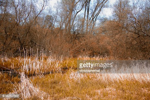 View through the trees on a country walk : Foto de stock