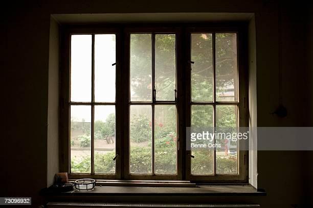View through window onto garden