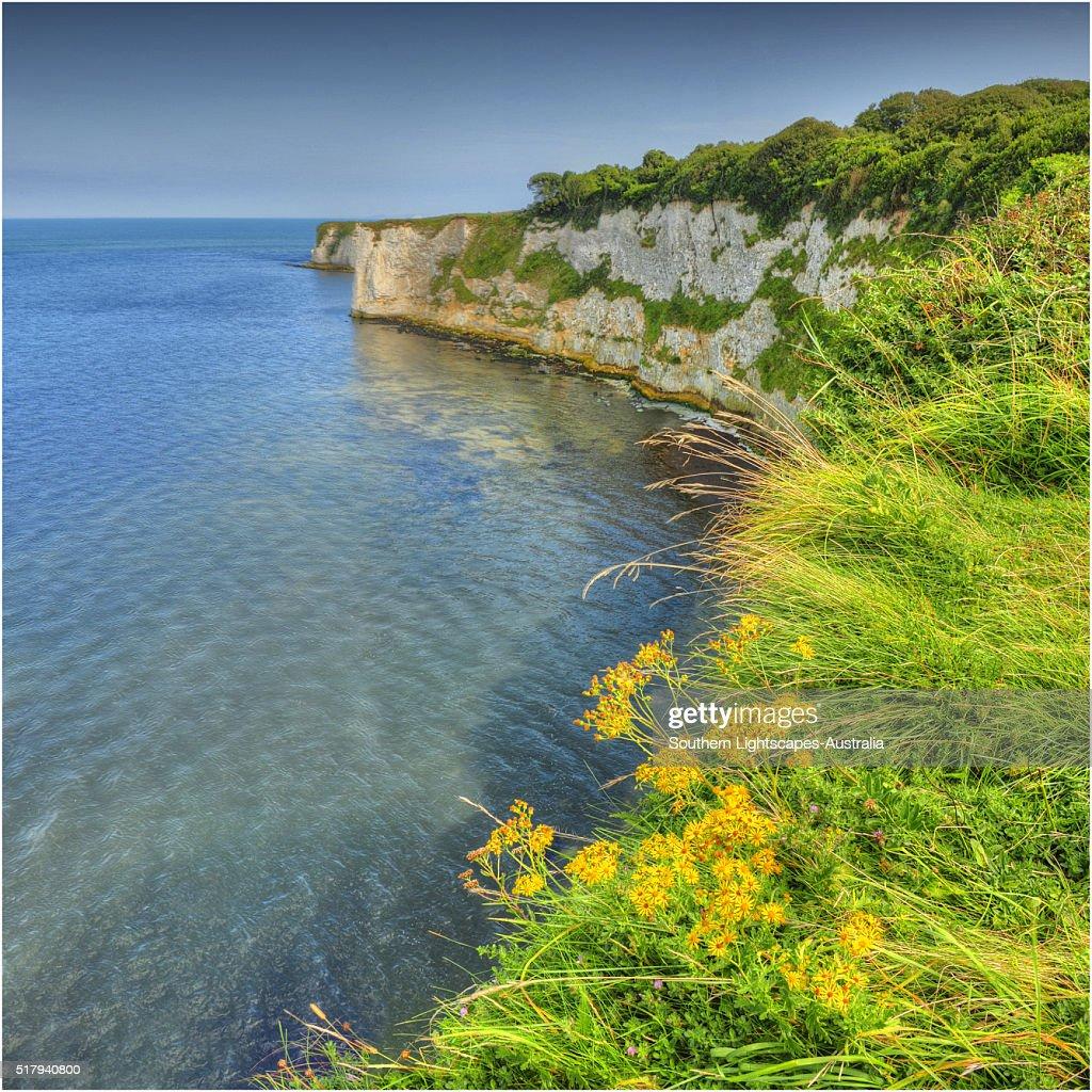 A view to Old Harry rocks, Jurassic coastline, Dorset, England, United Kingdom