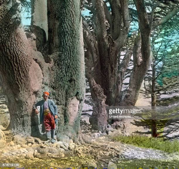 View to the oldest cedar trees of the Lebanon 1920s