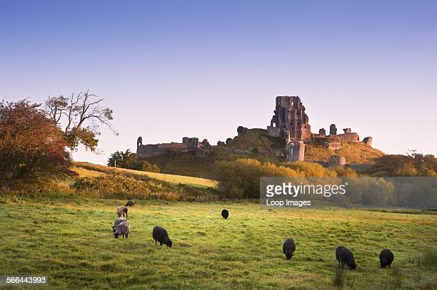 Loop Images/UIG via Getty Images